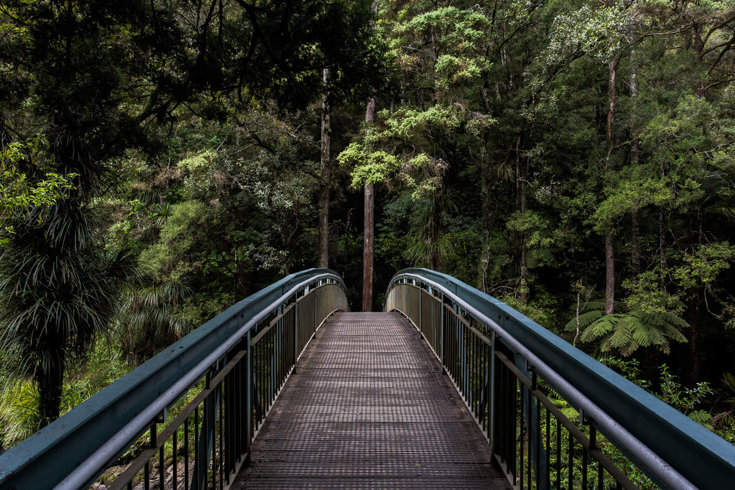 bridge in the bush
